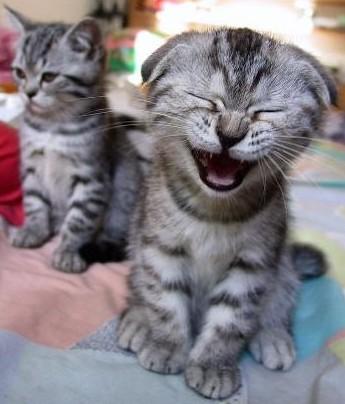 chat qui rit