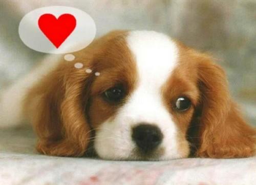 chien amoureux